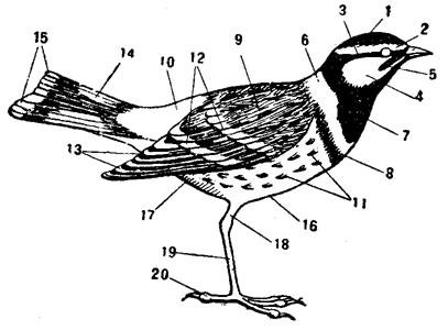 Схема обозначений частей тела