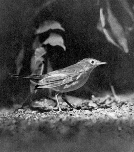 http://bird.geoman.ru/books/item/f00/s00/z0000004/pic/000897.jpg
